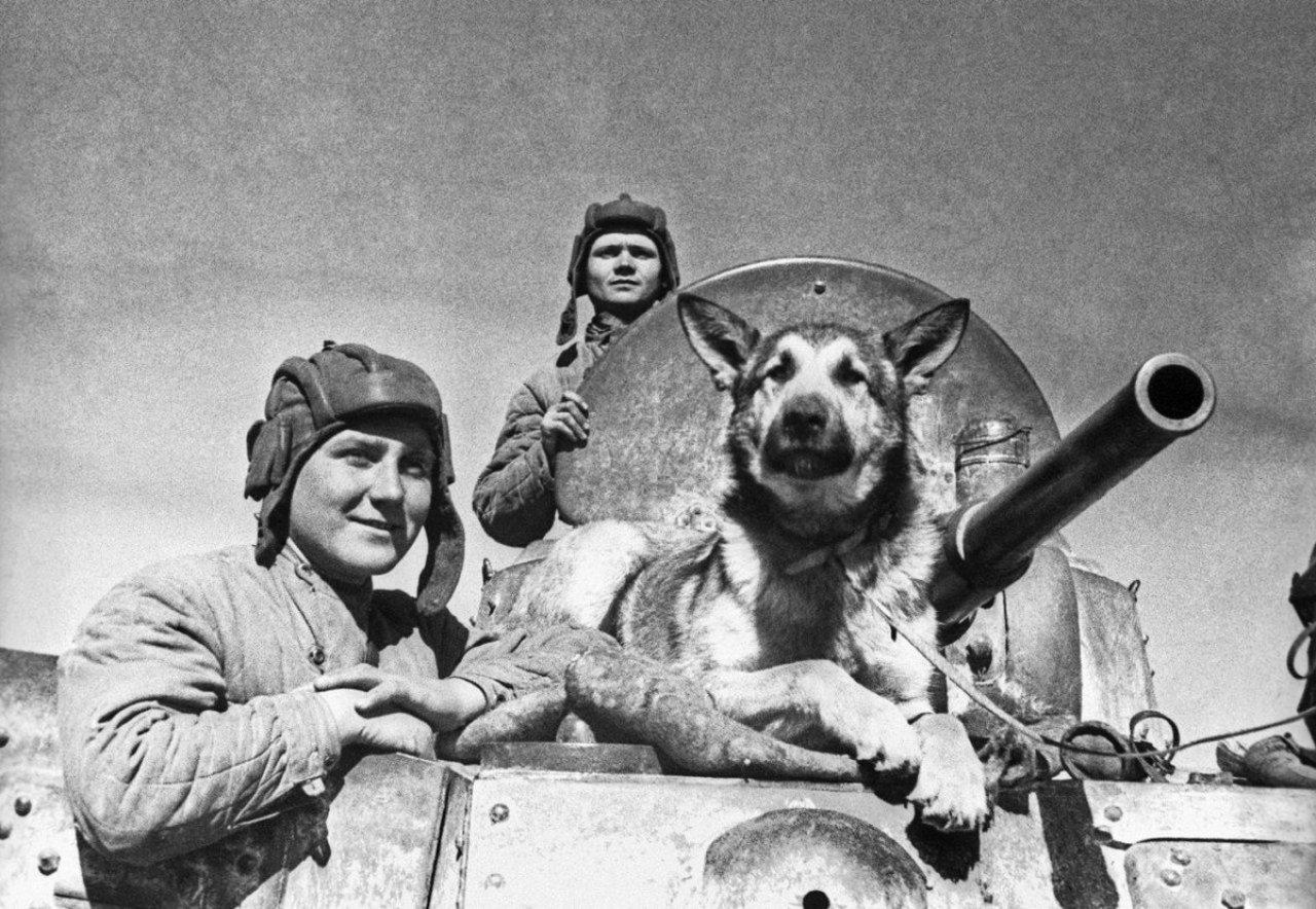 Музей расскажет о четвероногом участнике парада Победы